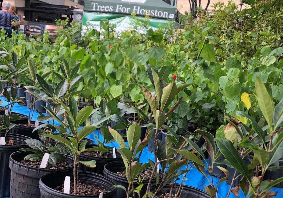 Trees for Houston Trees 1