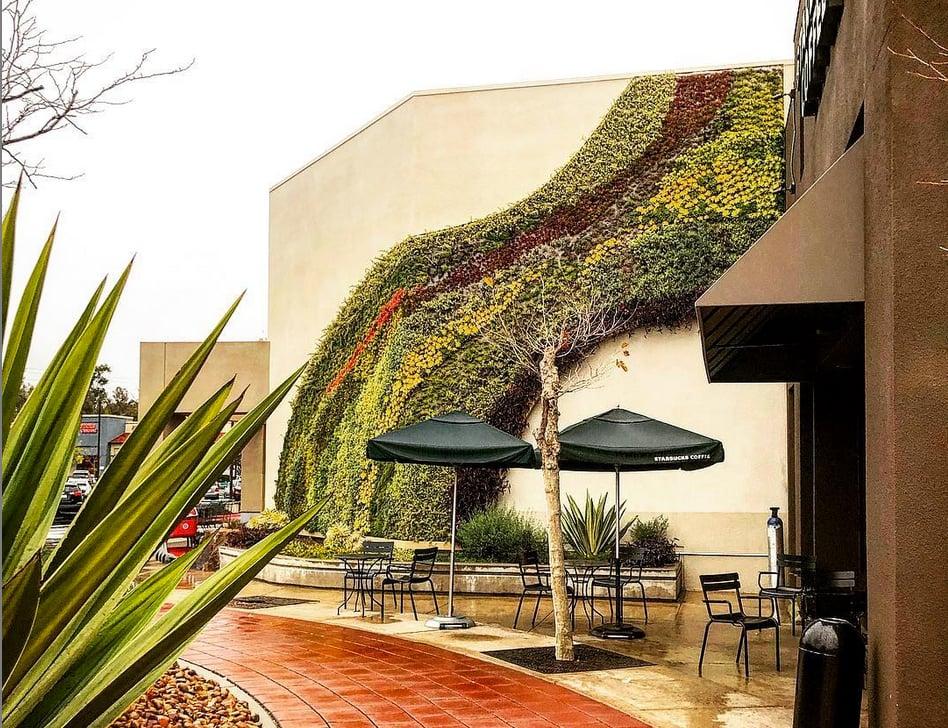 green succulent wall art