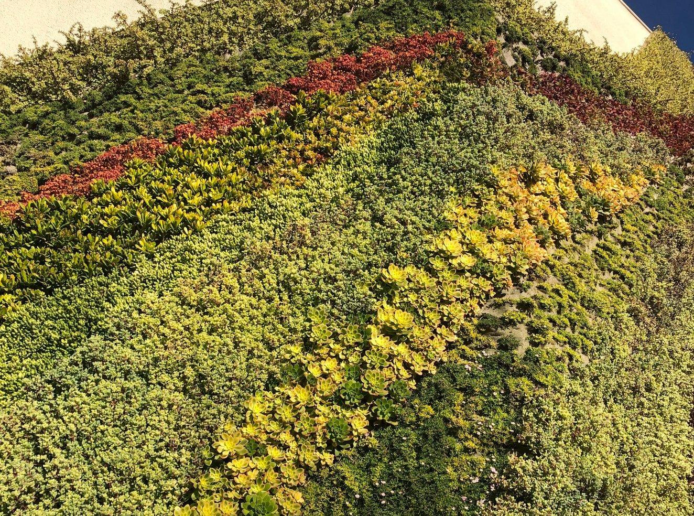 Succulent-Varieties