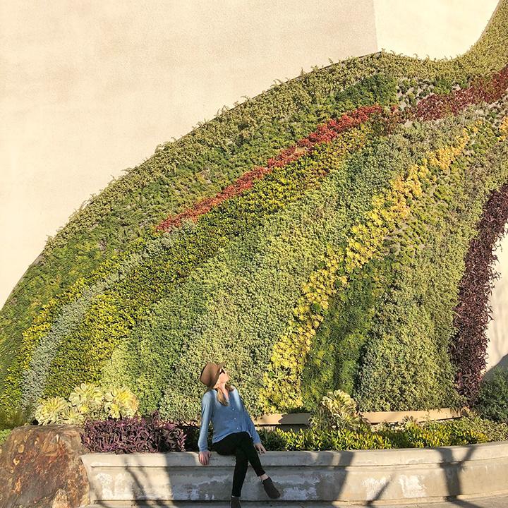 grass and succulent wall art